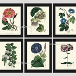 Botanical Print Set of 6 Antique EDW Beautiful Flowers Moss Province Rose Passion Fruit Flower White Jasmine Tea Blue Morning Glory Purple Phlox Garden Nature Plants Home Room Decor Wall Art Unframed