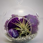 Mini Air Plant Terrarium with 3″ Glass, Purple Moss, Silver Rocks and Purple Agate Stone
